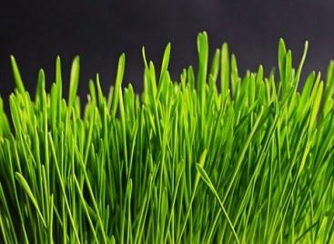 grass-534873__340